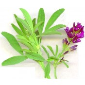 Organic Alfalfa (1)