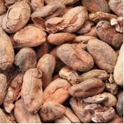 Organic Cacao (4)