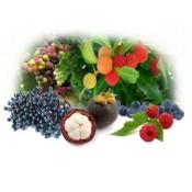 Organic Fruit Powder (6)